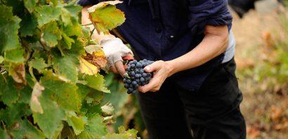 האם באמת מקרר יין הוא דבר הכרחי