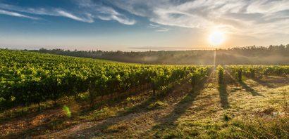 מפגעי הקיץ: כך תשמרו על איכות היין בחום והלחות של הקיץ הישראלי